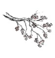 spring Sakura blossom drawing vector image