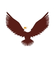 hawk animal bird america vector image