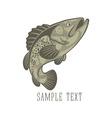 fish perch vector image vector image