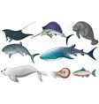 Ocean animals vector image