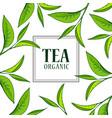 organic tea frame vector image