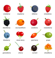 Berries Colored Icons Set With Inscription vector image