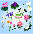 flower set with garden and house flowering plants vector image