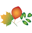 Colorful leaves vector image vector image