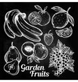 Various fruits set vintage linear style vector image