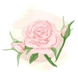 Bouquet of pink roses image vector image