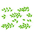 set of tree branches with green leaves vector image