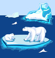 Polar bears on the ice near the iceberg vector image