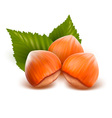 filberts with leaves vector image