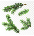 fir tree branches isolated on white background vector image