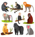 different breads monkey character animal wild vector image
