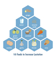 Foods to increase lactation vector image