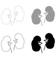 kidney the black and grey color set icon vector image