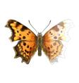 Butterfly Polygonia c-album vector image vector image