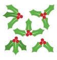Christmas symbol Holly berry icon vector image