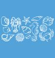 sea animals shine vector image