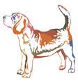 colorful decorative standing portrait of beagle vector image