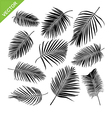 Collocetion of Palm leaves silhouettes vector image