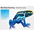 Poison dart frog vector image