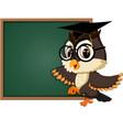 owl teacher at blackboard vector image