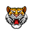 tiger roaring head muzzle mascot icon vector image