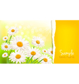 Nature background with fresh daisy vector image