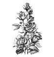beautiful roses bouquet hand drawn vector image