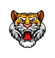 tiger roaring head muzzle mascot icon vector image