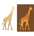 Giraffe with spots vector image