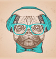 retro hipster animal pug-dog hand drawing muzzle vector image