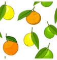 citrus mix - lemon lime fruit orange mandarin vector image