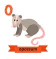 Opossum O letter Cute children animal alphabet in vector image