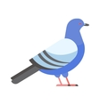 Dove icon cartoon style bird vector image