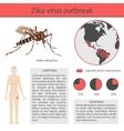 Zika virus infographics with transmission symptom vector image