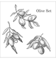 Ink hand drawn olive set vector image