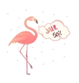Bright flyer with flamingos vector image