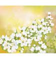 spring blossom branch vector image