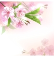 Blossoming tree branch with pink flowers vector image