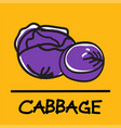cabbage hand-drawn style vector image
