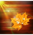 Autumn Leaf template plus EPS10 vector image