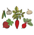 vegetable set sketch vector image