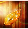 Autumn Leaf template plus EPS10 vector image vector image