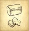 fresh toast bread vector image