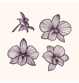Stylized drawing orchids vector image