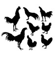 Roosters crowed silhouettes Activities vector image