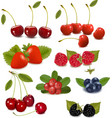 Fresh berries vector image
