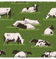 Cowcolorpattern vector image