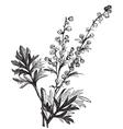 wormwood vintage engraving vector image vector image