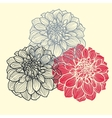 Hand-drawn flowers of dahlia vector image vector image