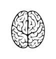 Brain top view vector image vector image